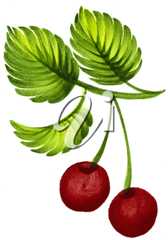 Royalty Free Clipart Image of Cherries