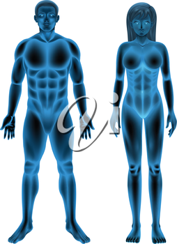 Illustration of the male and female human body