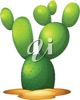 Illustration of the Opuntia microdasy on a white background