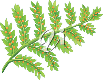 Illustration of a fern plant