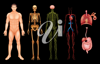 Various human body systems and organs on a black background