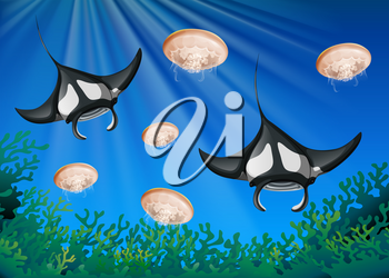 Manta ray and jellyfish under the ocean illustration