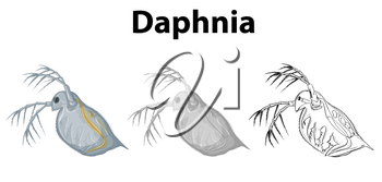 Doodle character for daphnia illustration