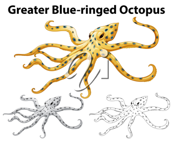 Doodle animal for greater blue-ringed octopus illustration
