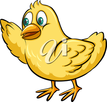 One yellow chick on a white background