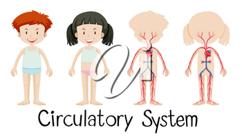 Boy and girl with circulatory system diagram illustration
