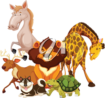 Group of animals on a white background
