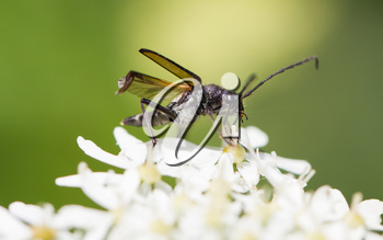 Insect on flower, selective focus, macro shot