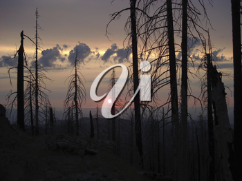 Stock Photo of Bare, Fire Burned Trees in Oregon