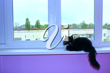 black cat sits on the window-sill of balcony