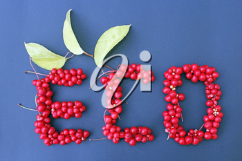 word Eco from red ripe berries of schisandra on the dark blue background. Healthful schisandra.