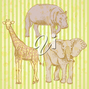 Sketch elepant, giraffe and hippo, vector vintage background