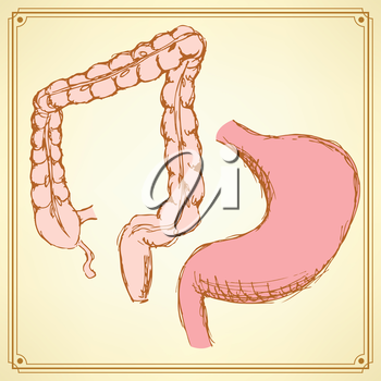 Sketch stomach and rectum  in vintage style, vector