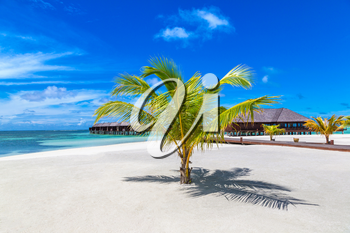 MALDIVES - JUNE 24, 2018: Palm tree at Tropical beach in the Maldives at summer day