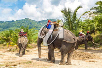 Tourists riding elephant trough jungle in Thailand in a summer day