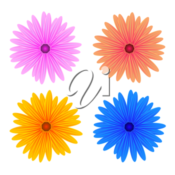 Colorful Fresh Spring Flowers Isolated on White Background.
