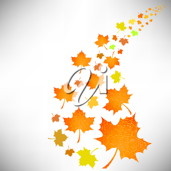 Falling Autumn Leaves Isolated on White Background