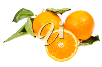 three oranges with green leaves isolated on white background