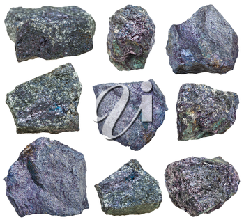 collection from specimens of Bornite (peacock ore, peacock copper) mineral isolated on white background
