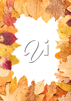 vertical picture frame from yellow autumn leaves with cut out blank space