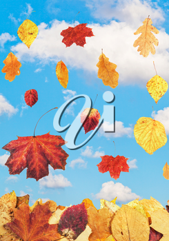 falling autumn leaves and blue sky with white clouds on background