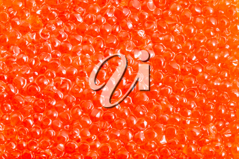 food background - salted russian red caviar of pink salmon fish close-up