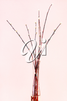 vertical pussy willow sunday (palm sunday) feast still-life - downy pussy-willow twigs in glass vase on pink pastel background