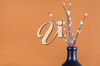 pussy willow sunday (palm sunday) feast concept - bundle of downy pussy-willow twigs in ceramic bottle on brown pastel background with copyspace