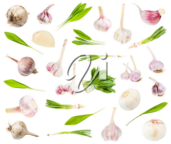 set of various edible garlic vegetables isolated on white background