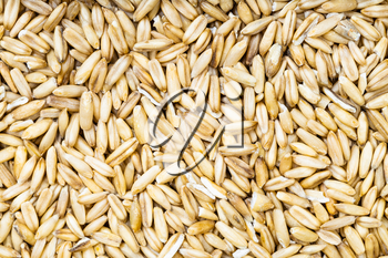 food background - top view of unpolished oat grains
