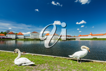 Swans in garden in front of the Nymphenburg Palace. Munich, Bavaria, Germany