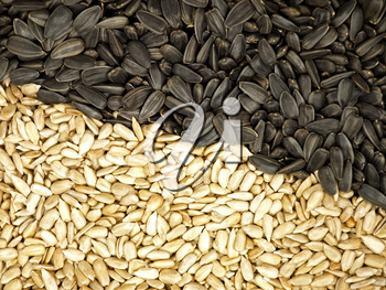 Sunflower Seeds Texture  As Background