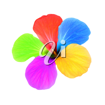 Multicolored flower taken closeup isolated on white background.