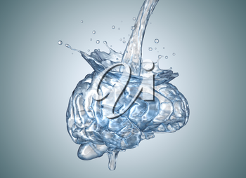 The brain is filled with water.3D illustration
