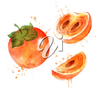 Watercolor isolated vector illustration of persimmon, whole, half and sliced with paint smudges and splashes.