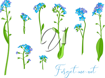 Vector illustration of woodland flower isolated on white background. Some variations.