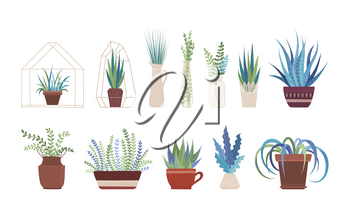 Houseplants, flowers in vases and pots flat vector illustrations set. Flowerpots with plants and greenery bouquets, interior design elements pack. Home flowers collection isolated on white background