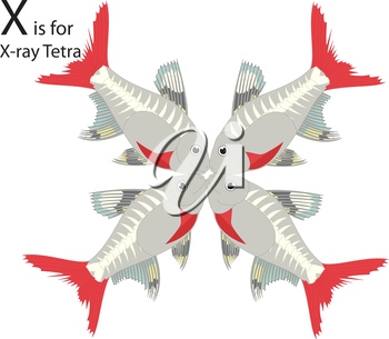 Royalty Free Clipart Image of four x-ray tetras making the letter 'X'
