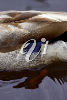 a close up of a body of a duck