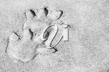 blur     in south africa  dirty footprint of wild animal marked the cement