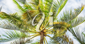 blur in philippines palm leaf and branch view from down  near pacific ocean