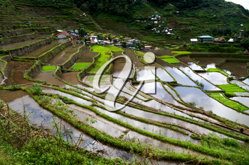 blur  in  philippines  terrace field for coultivation of rice  from banaue unesco site