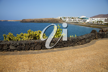 cactus coastline lanzarote  in spain musk pond beach  water yacht boat  and summer