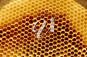 Fragment honeycomb with empty cells in sunlight