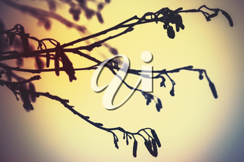Alder tree branches, colorful vintage tonal correction photo filter effect