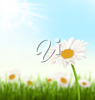 Green grass lawn with white chamomiles flowers and sunlight on sky background