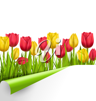 Green grass lawn with yellow and red tulips and wrapped paper sheet isolated on white. Floral nature flower background