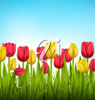 Green grass lawn with yellow and red tulips on sky. Floral nature flower background