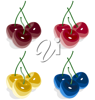 Sweet cherry multicolored isolated on white background