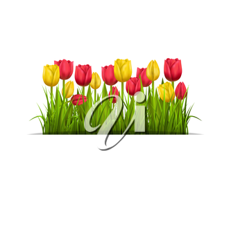Green grass lawn with yellow and red tulips isolated on white. Floral nature flower background